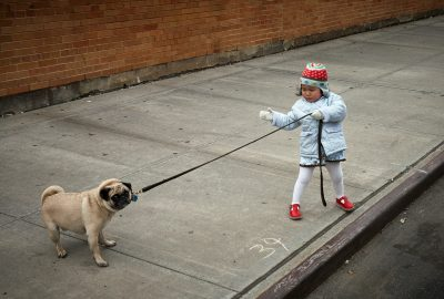 A child pulling a stubborn dog on a leash.